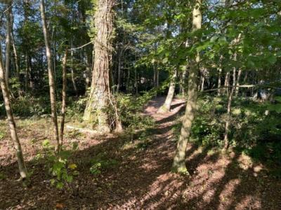 Zone forestière Hochheid : communication de la commune